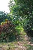 Belize Real estate-income producing citrus farm