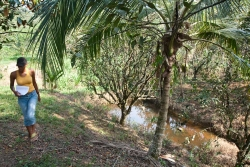 15-acres-citrus-mile19-7447_0
