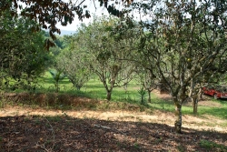 15-acres-citrus-mile19-7450_0