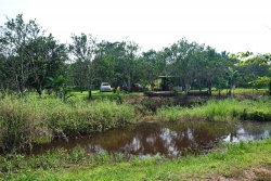 15-acres-citrus-mile19-7460_0