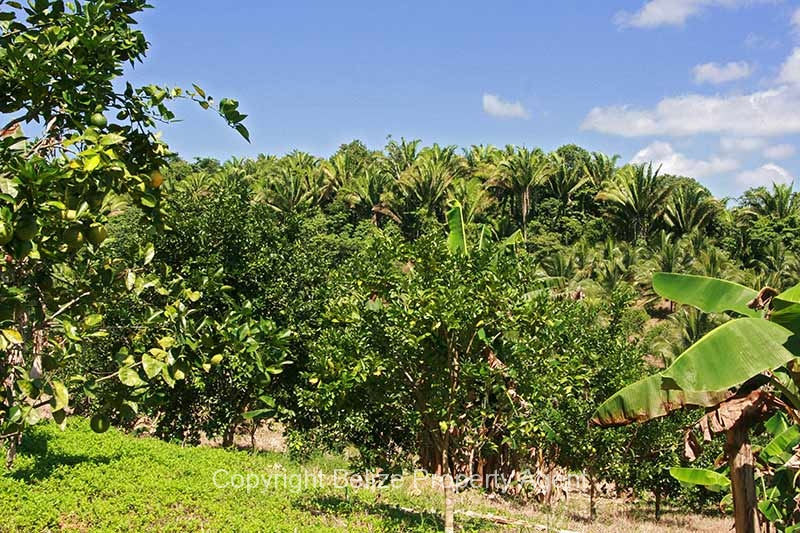 30acres-citrus-farm_05_0