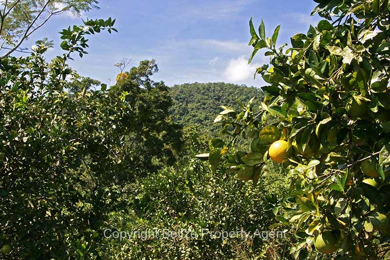 30acres-citrus-farm_08_0