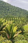 Belize real estate for sale-citrus farm on Hummingbird