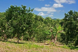30acres-citrus-farm_03_0