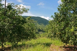 30acres-citrus-farm_04_0