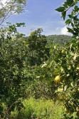 30acres-citrus-farm_07_0