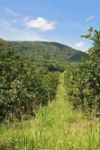 30acres-citrus-farm_09_0