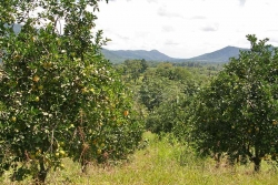 30acres-citrus-farm_12_0