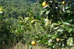 30acres-citrus-farm_19_0