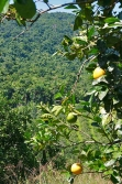 30acres-citrus-farm_20_0