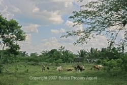 Belize Real Estate-land for sale in More Tomorrow