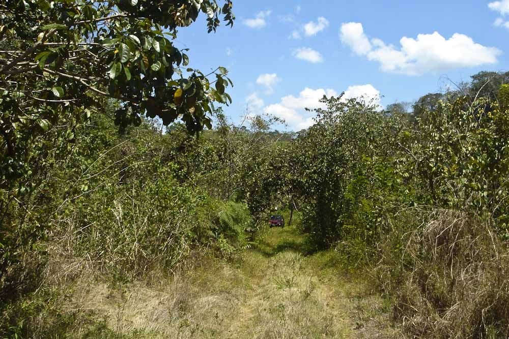 belize land for sale 150 acres in ontario village cayo no 1431