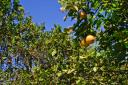 Real Estate in Belize for sale-32 acres of Citrus near Mile 21 on Hummingbird Highway!