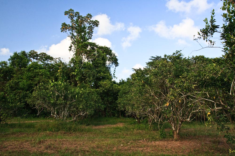 80 acres of Belize real estate with 3/4 mile river frontage