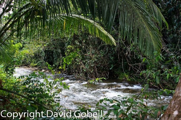 Cave's Branch area has some of the most desirable real estate in Belize