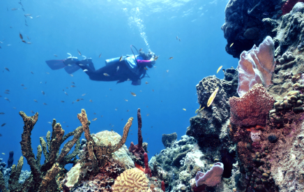 Many diver's purchase real estate in Belize after experiencing the barrier reef