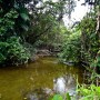 Belize Property 9.5 Acres River Front Land In The Silk Grass Area For Sale No. 1382