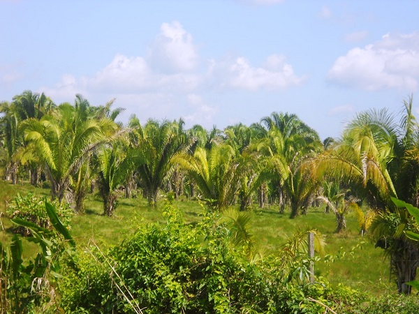 Palm trees on the property