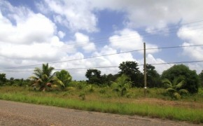 14.5 acres near Silk Grass village on the Southern Highway   No. 1436
