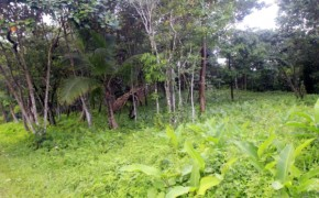 Belize Real Estate – 20 acres on mile 21 of the Hummingbird Highway no.1436