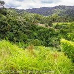 10 Acres Hummingbird Hwy With Views and Streams Planted Acai and Coconut No. 1451